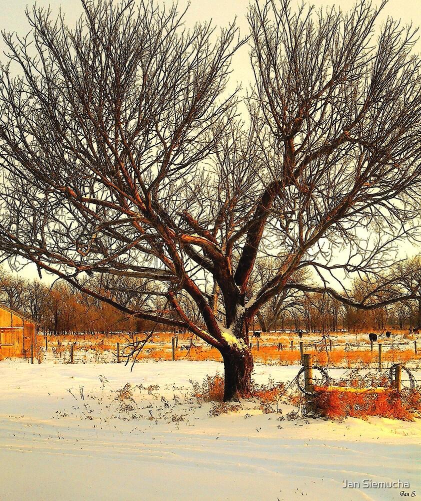 Fresh Dusting of Snow ! by Jan Siemucha