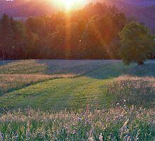 Summer meadow by didi24
