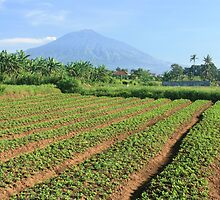 Gunung Arjuna, Malang by Tim Coleman