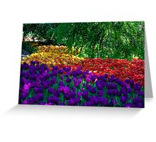 Color Explosion at the Cincinnati Zoo Greeting Card