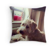 Harry, Wheaten Terrier Throw Pillow