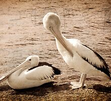 Two Pelicans by pennyswork