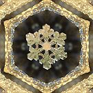 Winter jewels by Bill Brouard