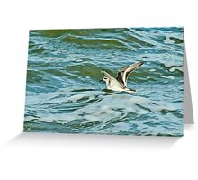 Grey Phalarope & Stormy Sea Greeting Card