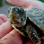 Baby Turtle by Loree McComb