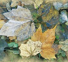 Autumn Leaves by Mark Fountain