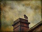 Urban starling by inkedsandra