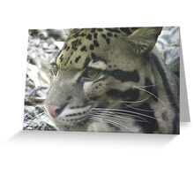 Cute Clouded Leopard Greeting Card