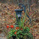 pump and geraniums. Port Franks, Ontario, Canada by creativegenious