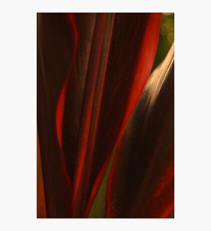 Sensual Solitude... Kauai Sensual Series Photographic Print
