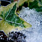 Frozen Ivy by amypalko