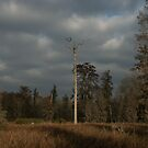 Lone Tree, Phinizy Swamp Nature Park by yakkphat