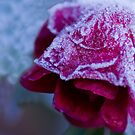 My Frosty Rose Hat by DIANE  FIFIELD