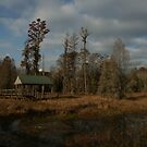 Swamp Overlook, Phinizy Swamp Nature Park by yakkphat
