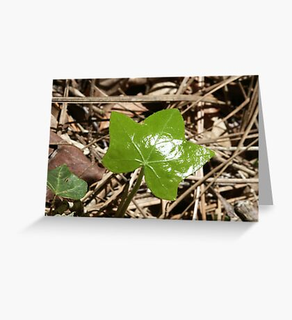 New Life - Color in a dull world Greeting Card