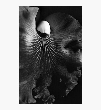 Velvet Photographic Print