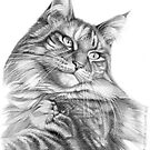 Maine Coon portrait G113 by schukinart
