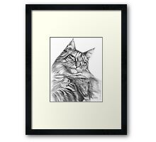 Maine Coon portrait G113 Framed Print