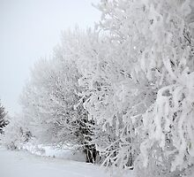 Winter part 3 by Linda Pettersson