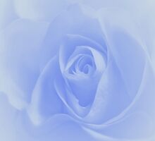 Blue rose by Imagevixens