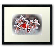 Winter Garden  Framed Print