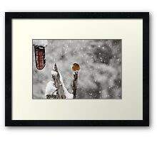 Robin Redbreast in Snow Framed Print