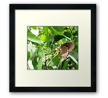 Sucking the Life Force Framed Print