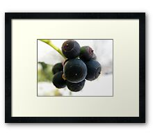 Snow Berries Framed Print