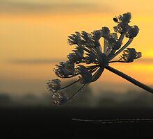 Frosty sunset by Cyrusdvirus
