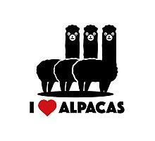I Love Alpacas Photographic Print