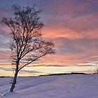 Winter Sunset - Waldridge Fell, Country Park. UK by David Lewins