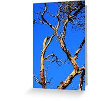 skyward arbutus tree Greeting Card