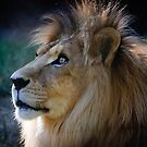 Jacob,  African Lion Wildlife World Zoo by Peggy Coleman