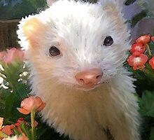white ferret by jashumbert