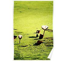 La Lily Pad Poster