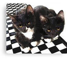 tuxedo kittens Canvas Print