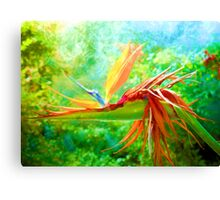 Bird of many feathers Canvas Print