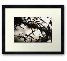Pseudo-Chiaroscuro Framed Print