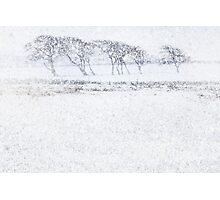 Snow drift Photographic Print