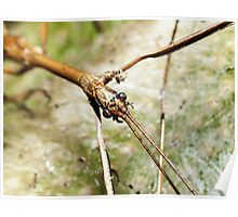 Eyes of the Stick Insect  Poster