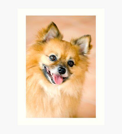 Foxy Lady - Pomeranian  Art Print