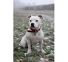 Millie in the Frost 2 Photographic Print