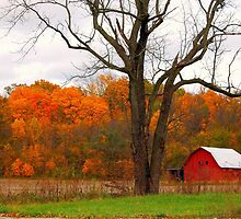 The Colors of Fall  by Grinch/R. Pross