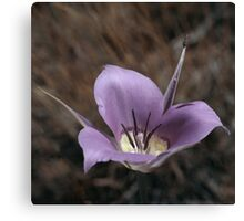 Green-Belted Mariposa Lily Canvas Print