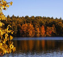 Afternoon on Walden Pond by Paul Harrison