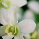 Flower by Ryan Carter