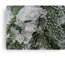Snowy Fir Branch Canvas Print