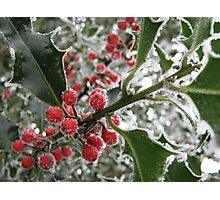 Icy Holly Berries Photographic Print