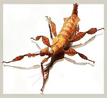 Twiggy the Spiny Leaf Insect by Naomi  Kevin