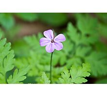Beautiful Mauve Flower Photographic Print